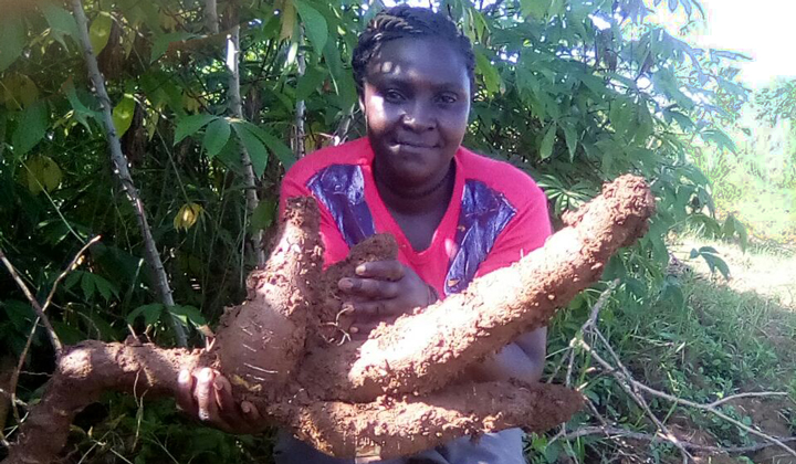 Cassava farmers in Kenya